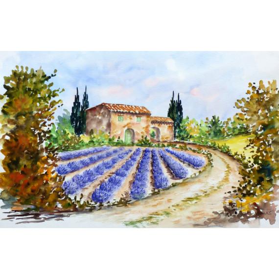 Un champs de lilas en provence