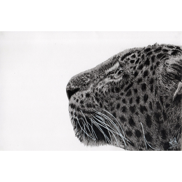 drawing - The panther-alexis-raoult