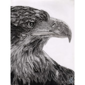 drawing - The eagle