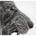 drawing - The lion-alexis-raoult