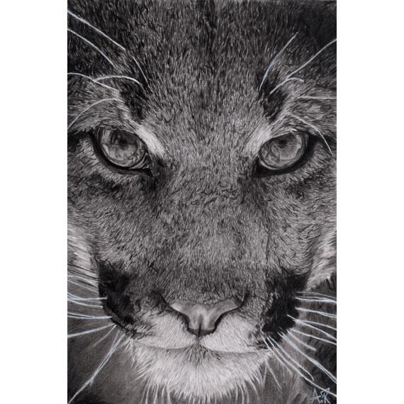 dessin - La lionne-alexis-raoult