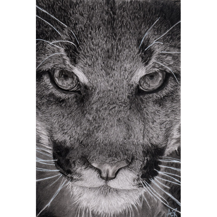 drawing - The lioness-alexis-raoult