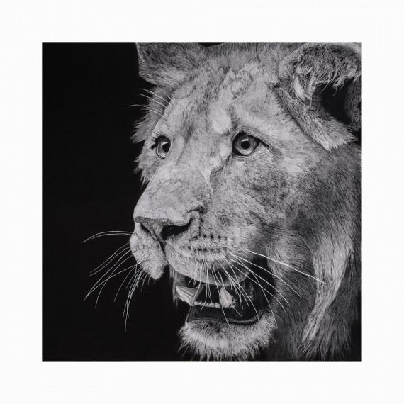 Édition limitée - LE JEUNE LION ALEXIS RAOULT