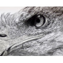 Drawing - Eagles