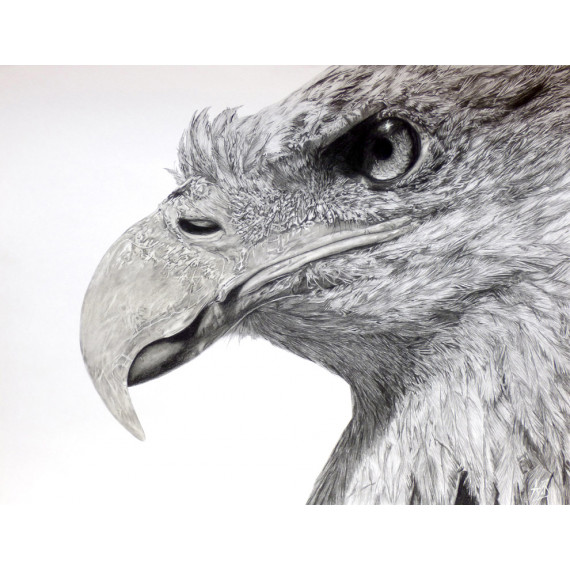 dessin - Eagles