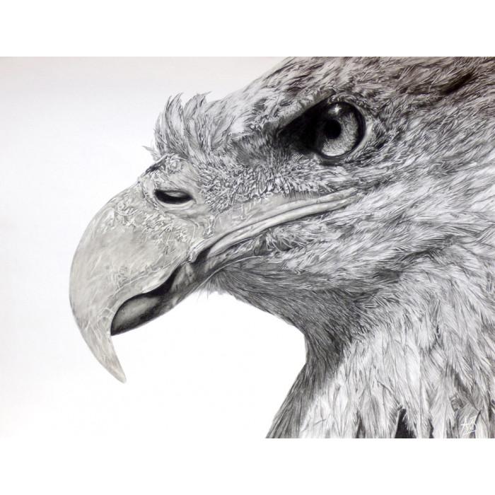 dessin - Eagles