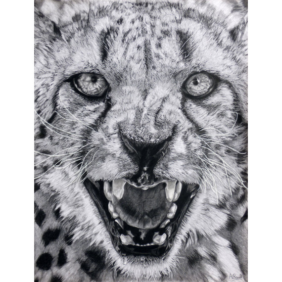 Drawing - Jaguar