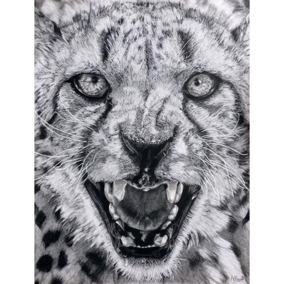 dessin-jaguar-alexis-raoult