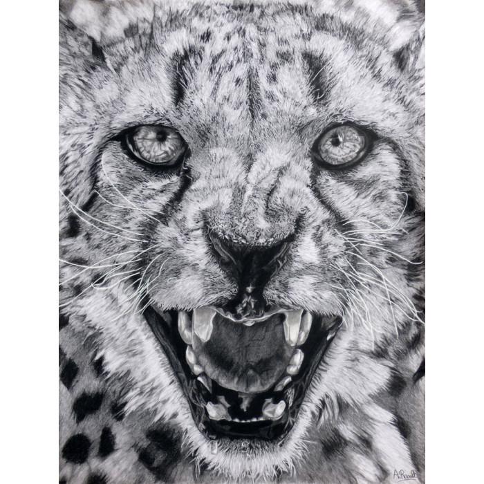 Drawing - Jaguar
