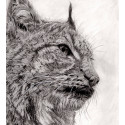 Drawing - Little Lynx -alexis-raoult