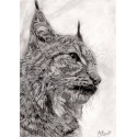 dessin - Le petit Lynx