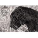 dessin - Le jaguar noir -alexis-raoult