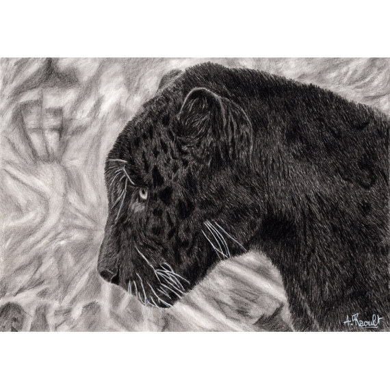 Drawing - Black jaguar
