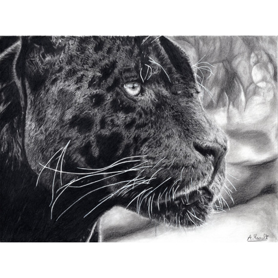 Drawing - Black jaguar alexis raoult