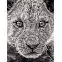dessin - Le Jeune Lion
