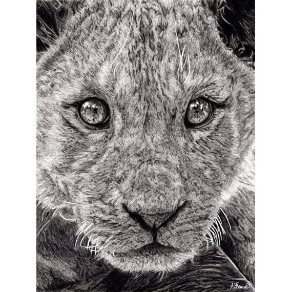 Drawing - The young lion