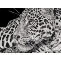 dessin - Simara, Le Jaguar