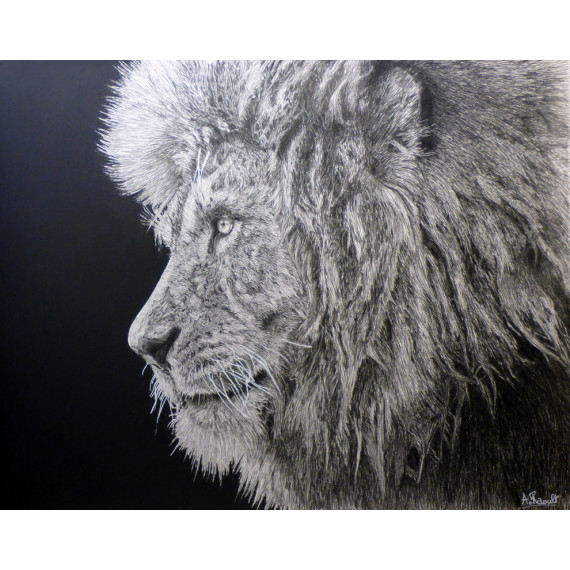 dessin - Le lion