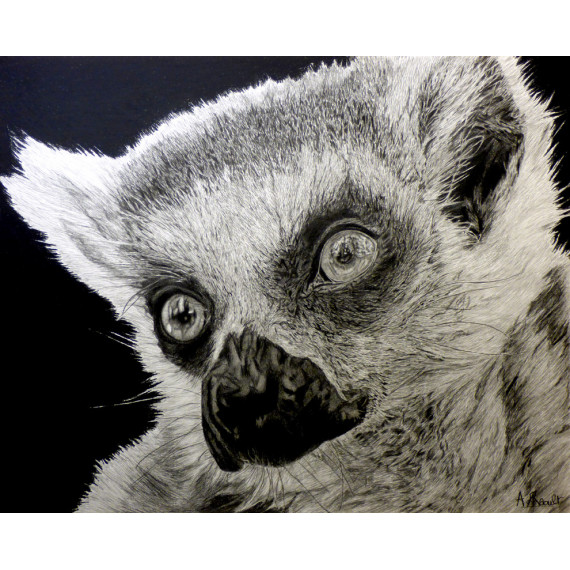 Drawing - The Lemur