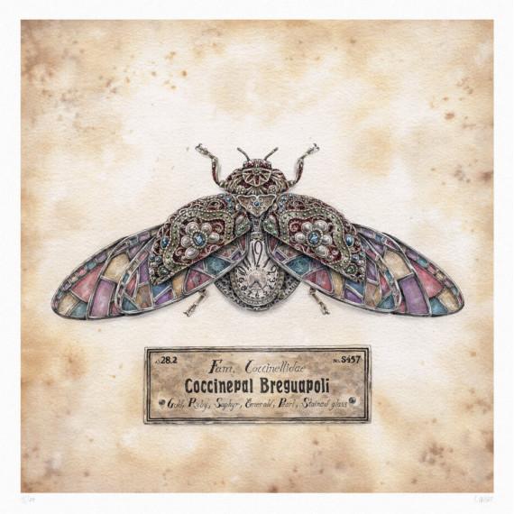 Steeven Salvat - Coccinepal Breguapoli Spread wings
