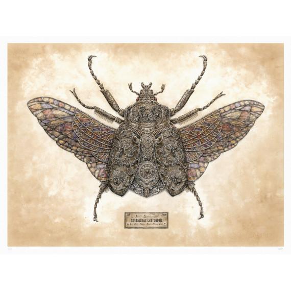 Steeven Salvat - Goldiathus Lestourgis Spread wings