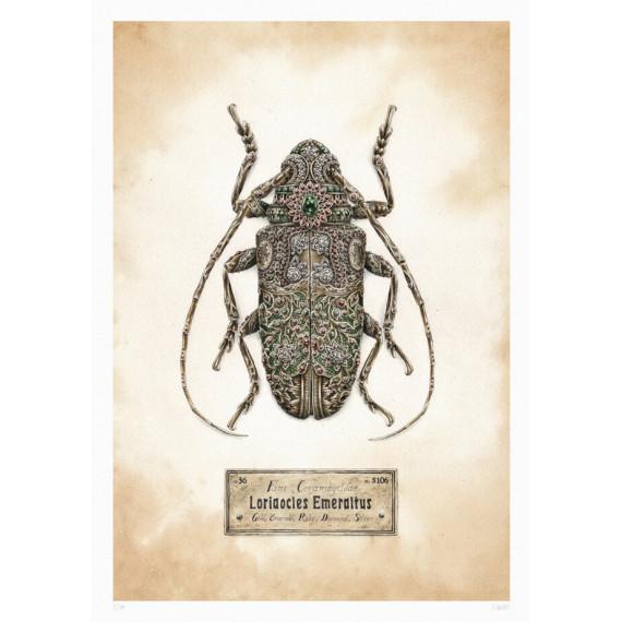Steeven Salvat - Loriaocles Emeraltus