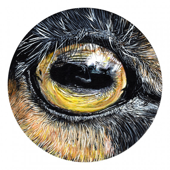 Eye by V. - Animal n°4 - Désiré
