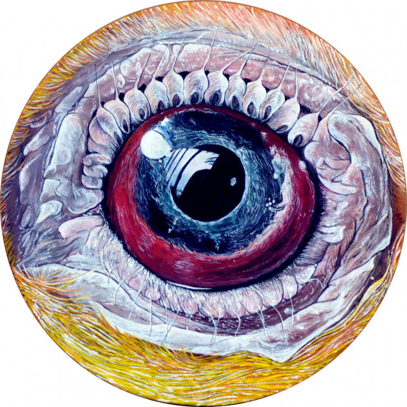 Eye by V. - Animal n°7 - Kiwi