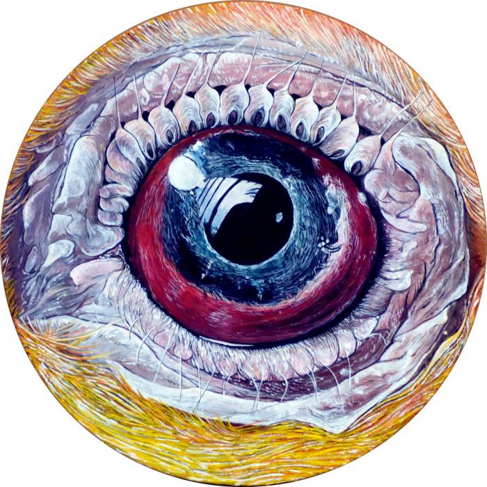 Eye by V. - Animal n°7 - Kiwi