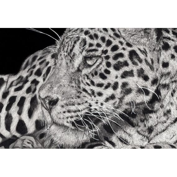 Édition limitée - Simara le Jaguar Alexis Raoult