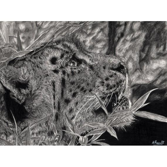 dessin - Esha, la Panthère des Neiges, Ménagerie