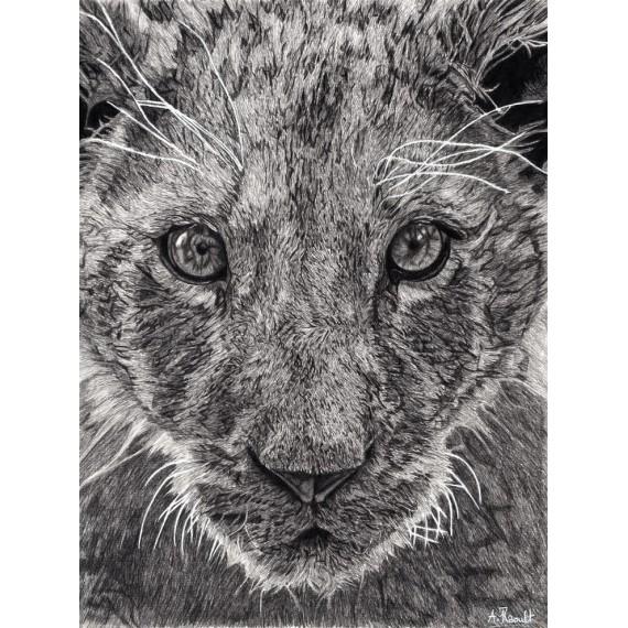 Drawing - Léo, Le Lionceau, Thoiry