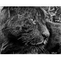 dessin - Aramis, Le Jaguar Noir, Ménagerie -alexis-raoult