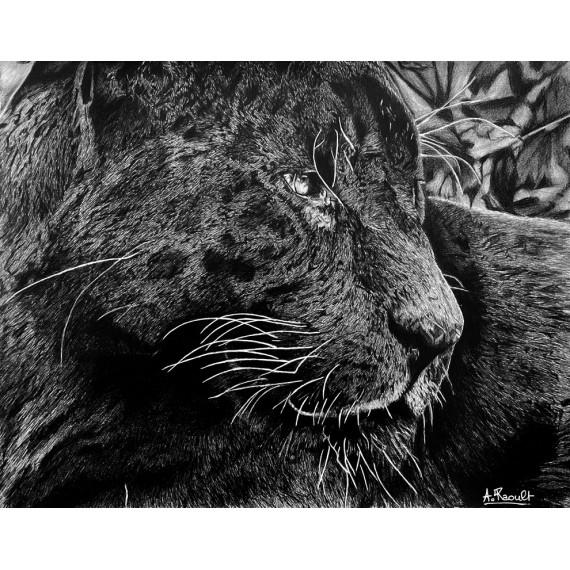 Drawing - Aramis, Le Jaguar Noir, Ménagerie