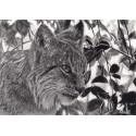 Drawing - Einar, le Lynx, Ménagerie