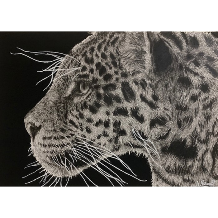 dessin - Simara, le Jaguar, Ménagerie