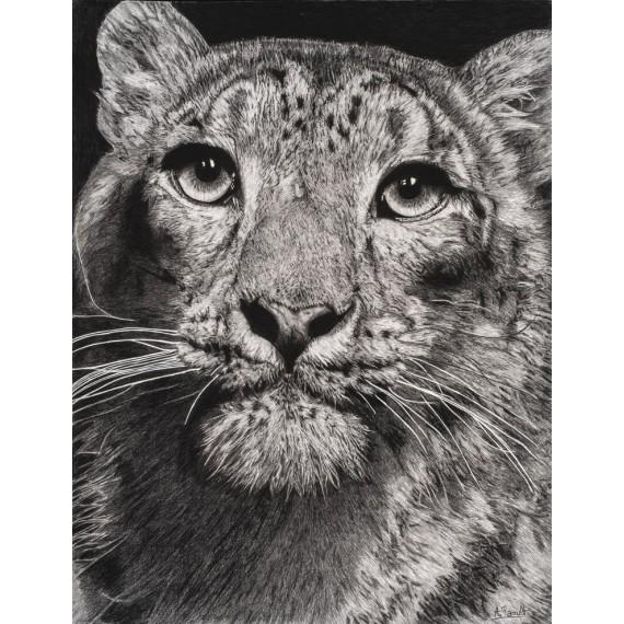 Drawing - Esha, La Panthère des Neiges, Ménagerie