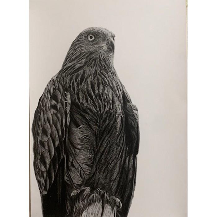 dessin - L'Aigle, Vincennes raoult