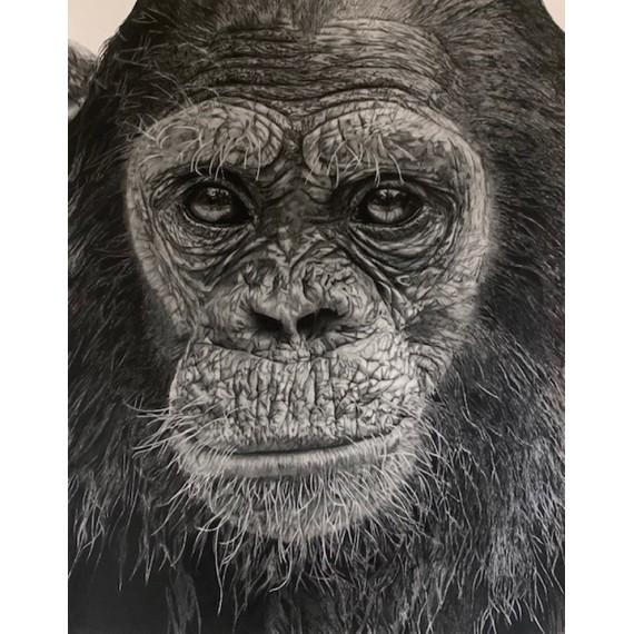 Drawing - Le Singe