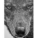 dessin - Enrique, Le Loup Alpha, Ménagerie