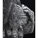 dessin - Nenette, L'Orang Outon, Ménagerie -alexis-raoult
