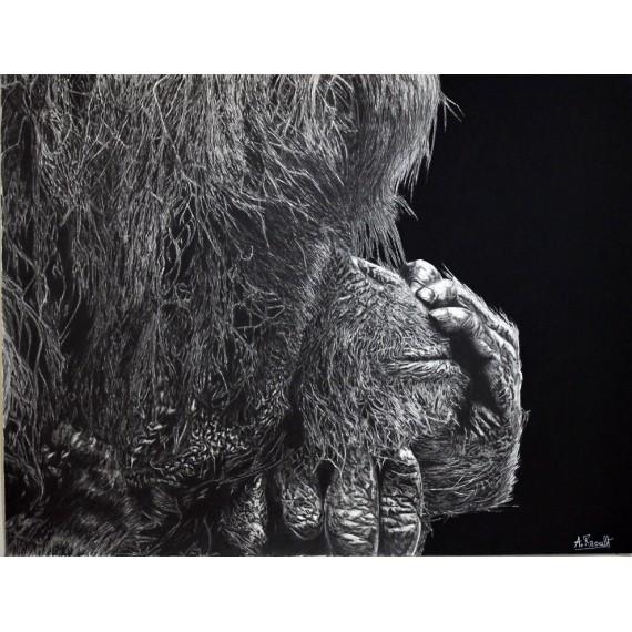 Drawing - Nenette, L'Orang Outon, Ménagerie