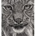 dessin - Einar, Le Lynx, Ménagerie