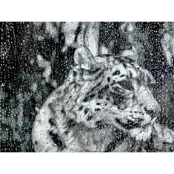 Drawing - Esha, La Panthère des Neiges sous la pluie, Ménagerie