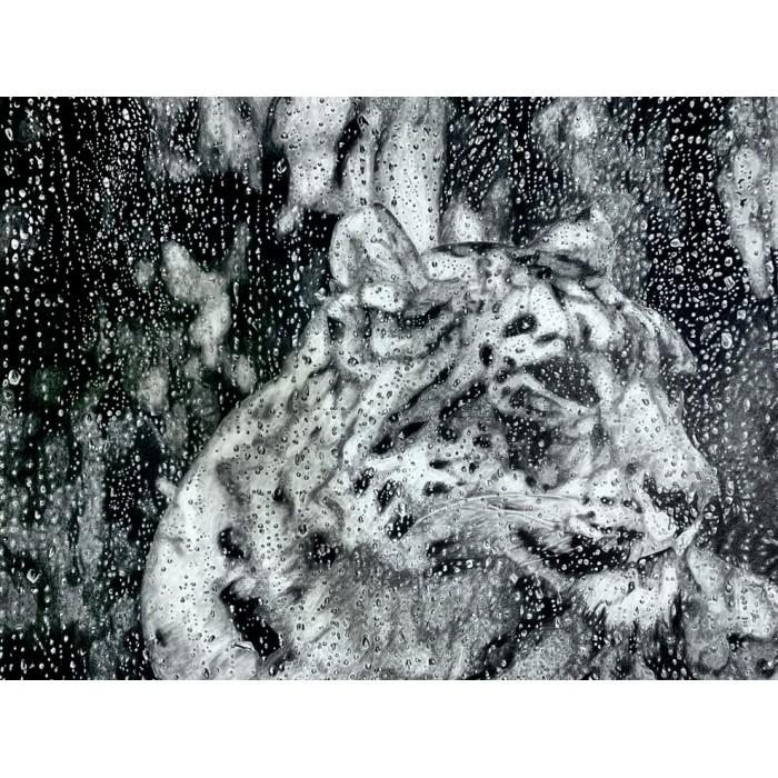 dessin - Esha, La Panthère des Neiges sous la pluie, Ménagerie
