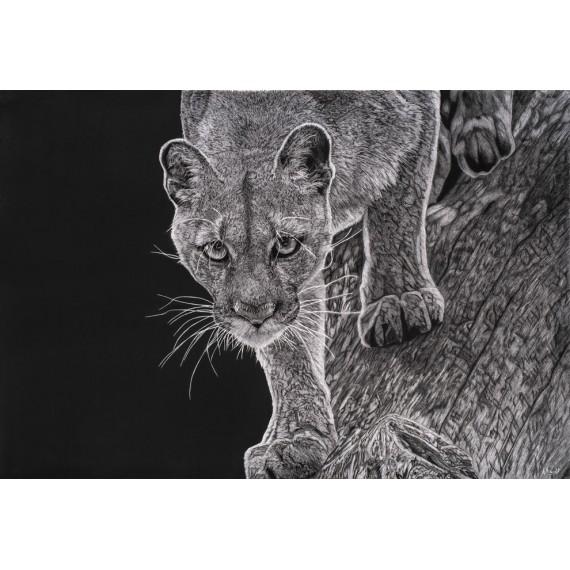 Drawing - Kali, le Puma, Vincennes