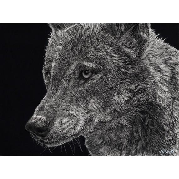 dessin - Diégo, le Loup, Ménagerie -alexis-raoult