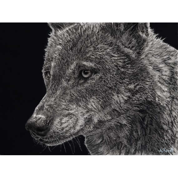 Drawing - Diégo, le Loup, Ménagerie