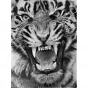 dessin - Le Tigre -alexis-raoult