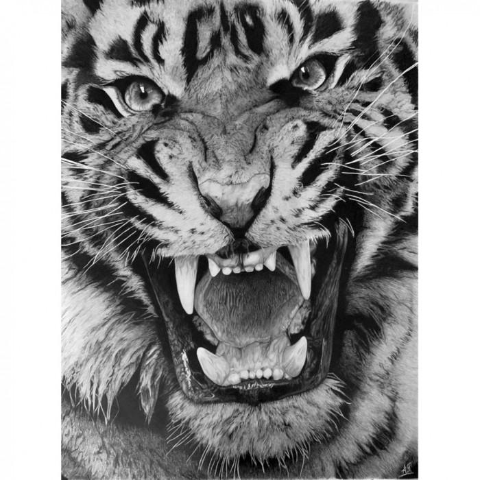 Drawing - Le Tigre